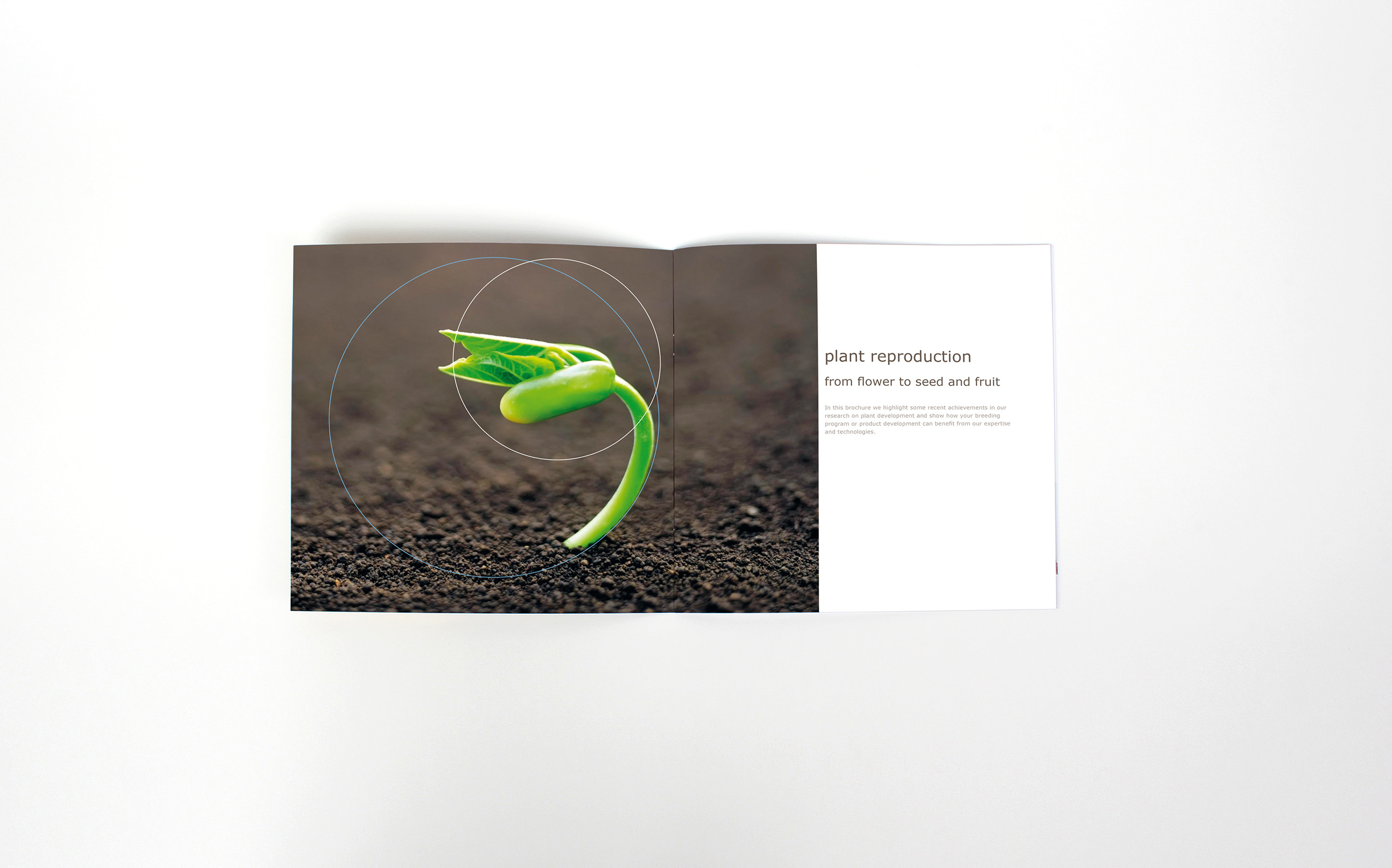 Brochure, Plant Reproduction, Wageningen UR, lay-out Neo & Co